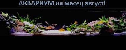 АКВАРИУМ на месеца