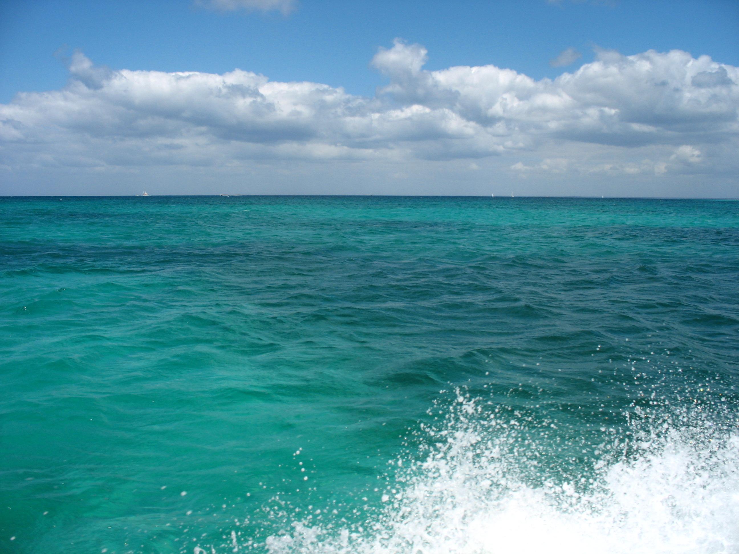 Алармират екокатастрофа в черно море